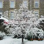 snow 003