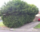 hedge haircut
